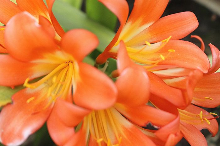 World like beauty flower Flower Petal Orange Color Flower Head Fragility Nature Freshness Beauty In Nature Blooming Close-up No People Day Growth Plant Outdoors Day Lily First Eyeem Photo Sommergefühle
