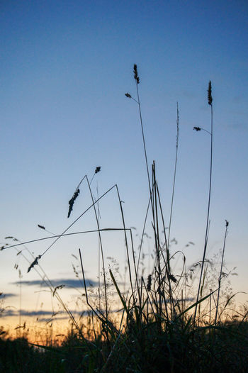 Low angle view of silhouette birds flying over field against sky
