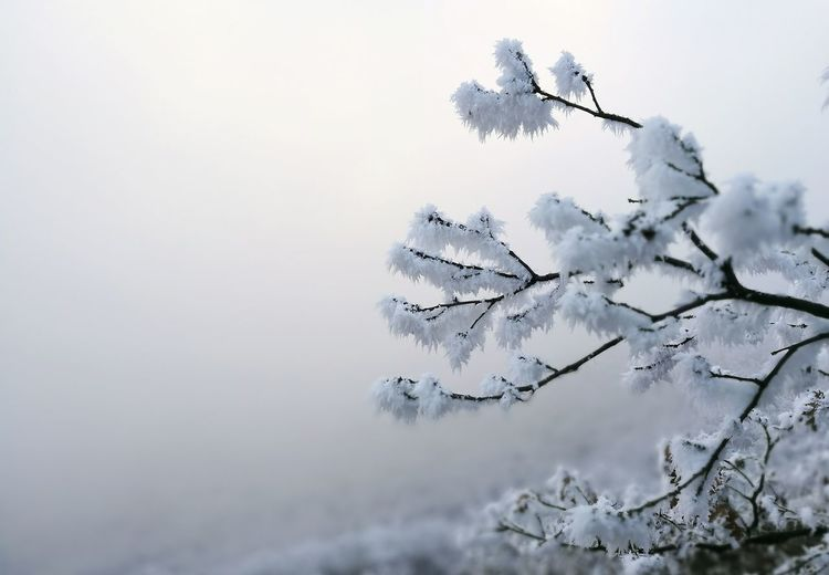 Mountain Fog Tree Ice Crystals Landscape No People