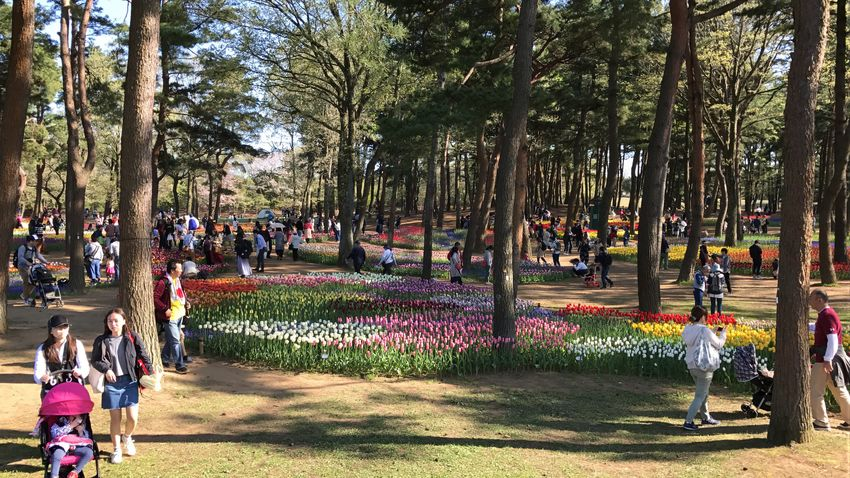 Large Group Of People Tree Nature Men Walking Real People Outdoors Women People Growth Day Crowd Flower Beauty In Nature Adult Adults Only Sky HitachiSeaSidePark