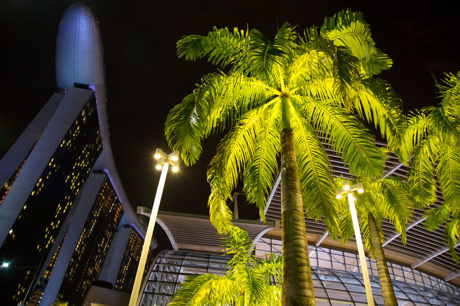 Marina Bay Sands Architecture Building Building Exterior Built Structure City City By Night Coconut Palm Tree Green Color Growth Illuminated Lighting Equipment Low Angle View Nature Night No People Outdoors Palm Tree Plant Sky Tall - High Tree Tropical Climate