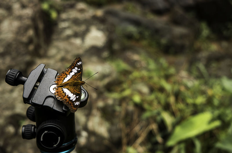 Close-up of butterfly on tripod