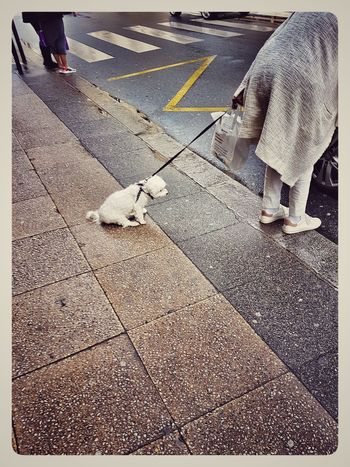 Human Leg Day Animal Themes Real People Deceptively Simple From My Polnt Of View Capture The Moment Streetphotography France🇫🇷 Paris ❤ Samsung Galaxy S7 Edge Street Photography People Of EyeEm Dogslife Dogs Of EyeEm Dog Of The Day Street Ordinary Scene Atmospheric Scene Scenics EyeEmBestPics Low Section High Angle View Adult One Person The Street Photographer - 2017 EyeEm Awards BYOPaper!