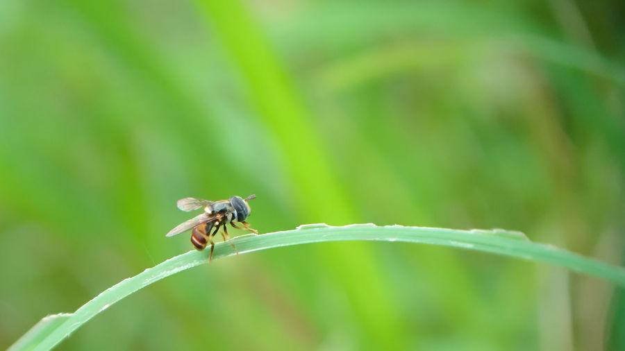 Litle bee