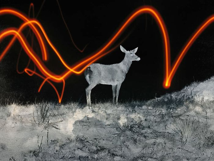 Abstract Close-up Dark Glowing Heat - Temperature Illuminated Light Trail Motion Mule Deer Multi Colored Nature Night No People Orange Color Outdoors Wyoming
