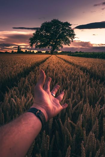 Human Hand Human Body Part Real People One Person Nature Tree Personal Perspective Sunset Human Finger Sky Field Growth Beauty In Nature Tranquility Agriculture Outdoors Scenics Rural Scene Day Close-up Sommergefühle