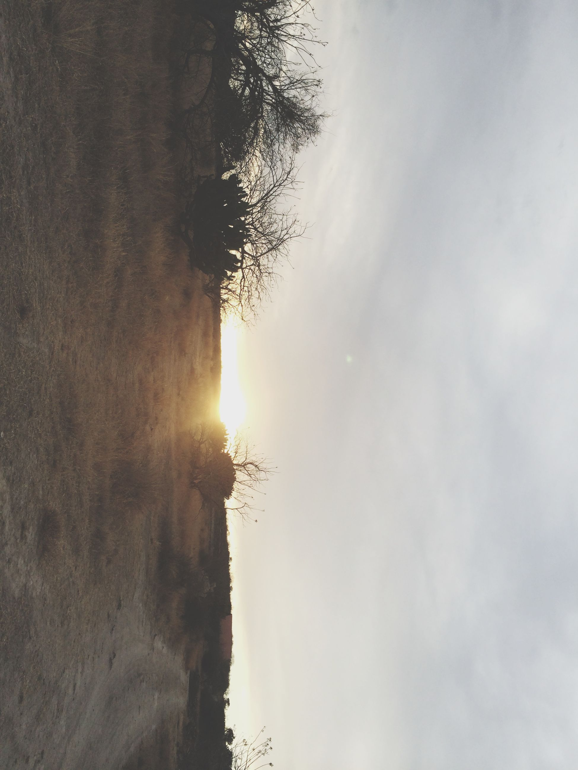 sun, tranquility, sky, tranquil scene, scenics, sunset, beauty in nature, sunlight, tree, nature, sunbeam, landscape, cloud - sky, silhouette, idyllic, lens flare, non-urban scene, outdoors, no people, field