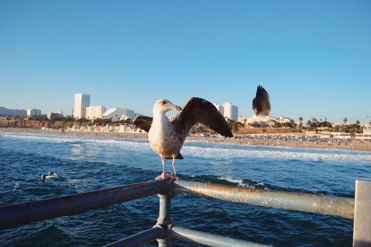 Seagull Perching On Railing Against Beach