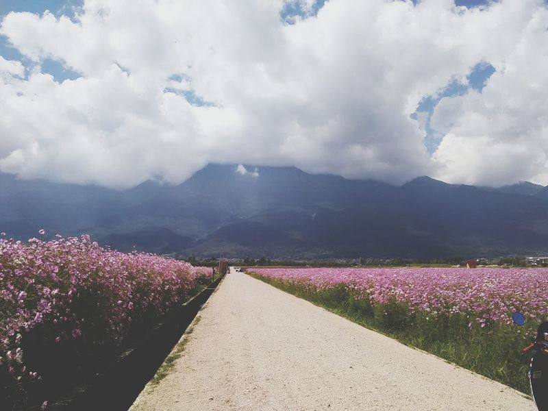 Flowers Clouds Nice View Natural Beauty