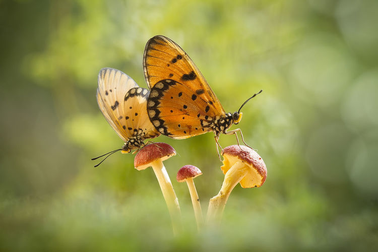Close-up of butterflies on mushroom