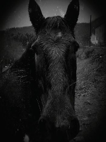 Black Beauty One Animal No People Animal Wildlife Mammal Animal Themes Domestic Animals Water