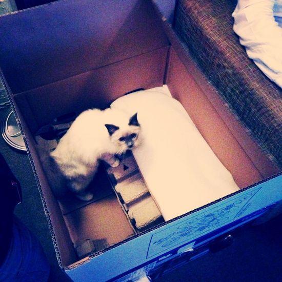 Cat Kitty Pet Cute