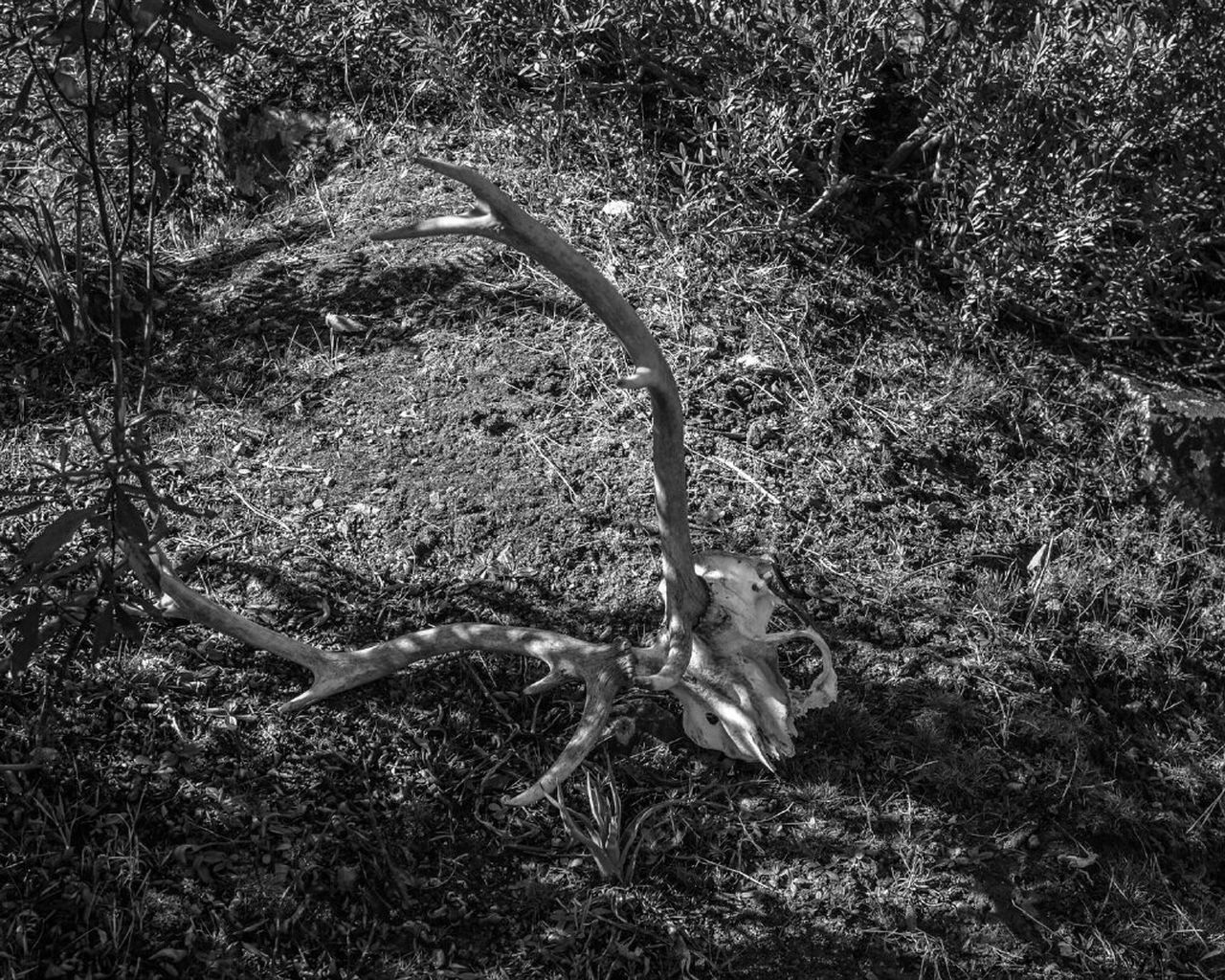 one animal, animal themes, no people, field, day, animals in the wild, grass, outdoors, nature, mammal, tree