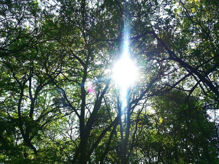 Woods Serenity