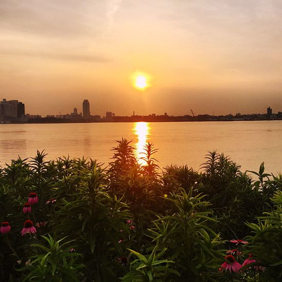Cityscapes Eastvillage Newyorkcity Newyork Urbanexploration Urban Nature Popupartevent Eastriver Waterview