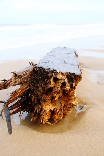 Washed up timber Washed Up Beach Beach Photography Beachphotography Beach Life Beachlife Seaside Log Timber Beach Day Getting Creative Getting Inspired Getting Low Creative Photography Creativephotography