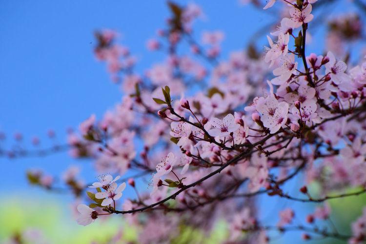 blossom Still