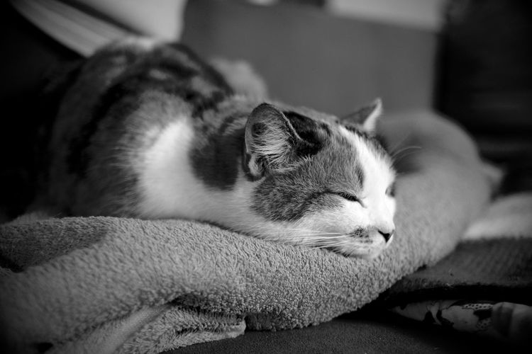 Relaxed Cat sleeping Entspannung Animal Themes Blackandwhite Cat Close-up Day Domestic Animals Domestic Cat Hauskatze Indoors  Katze Lying Down No People One Animal Pets Relaxation Schlafende Katze Schwarzweiß Sleeping Sleeping Cat