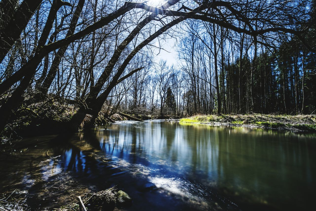 tranquility, tree, nature, tranquil scene, scenics, beauty in nature, water, forest, no people, river, non-urban scene, outdoors, day, bare tree, travel destinations, branch, sky