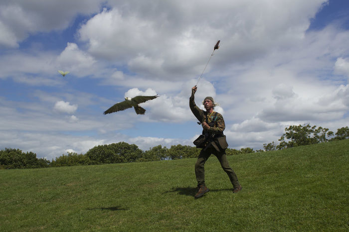 Falcon chases butterlfy Butterfly Cloud - Sky Falconry Display Flying Grass Mid-air One Person Outdoors Person Sky