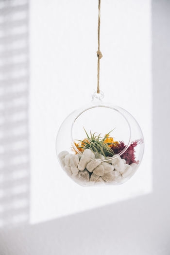 Directly above shot of plants in glass on table