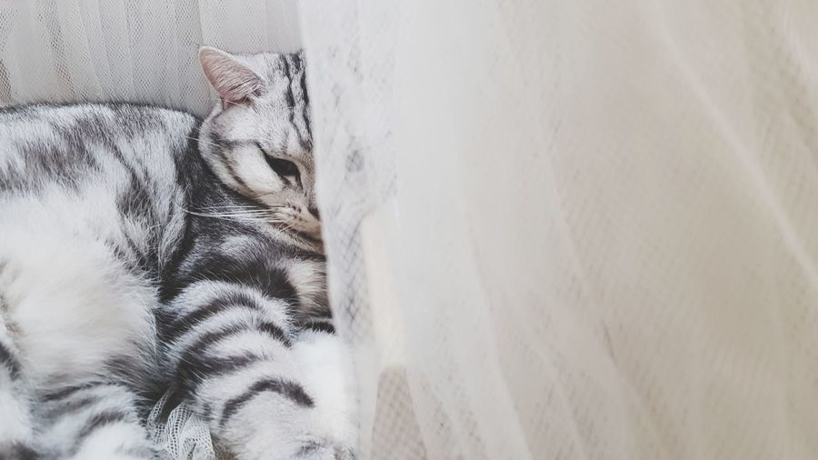 EyeEm Selects One Animal Animal Themes Mammal No People Pets Day Feline Domestic Animals Close-up Indoors  Nature First Eyeem Photo Pet Portraits EyeEmNewHere