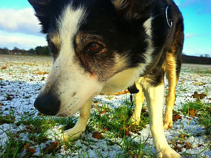 Dog Sky Talking Photos Light Effect EyeEm Nature Lover Relaxing Moments The Street Photographer - 2016 EyeEm Awards 43 Golden Moments Sunbeam Nature ,photoing A View ,Wat ,Wave, Wung(The Grand