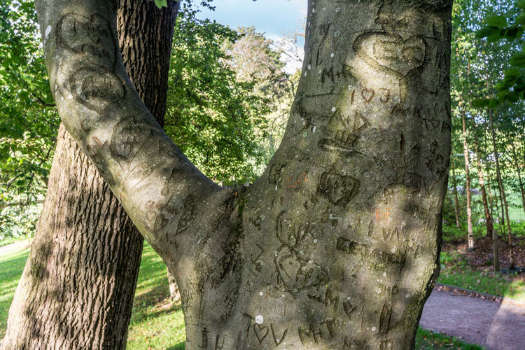 Close-up of tree trunk in park