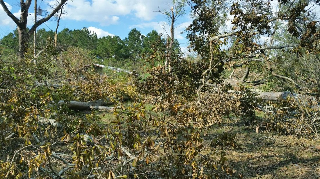 《 Hurricane Michael took the oldest & tallest trees. I may miss those beautiful trees, but I'm glad to see them go just knowing how many people lost their entire lives or the house they call home. My heart & prayers are with so many suffering, stranded, searching & still waiting for relief. 》 Hurricane Michael 2018 Wind Damage Extreme Weather Hurricane Storm Damage Hurricane Damage Fallen Tree Hurricane - Storm Alabama