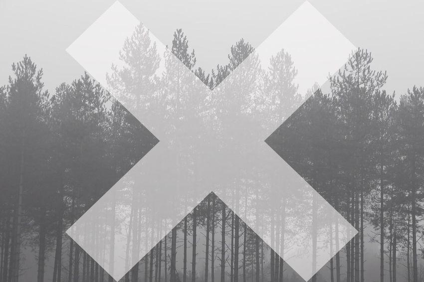 Woods Trees Blackandwhite Black & White