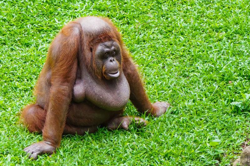 Monkey sitting on grass