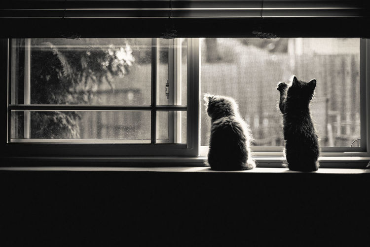 Cats sitting on window sill