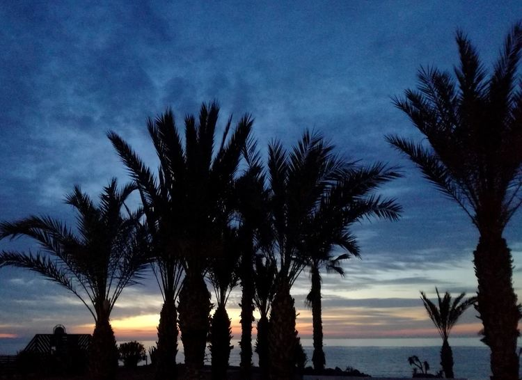 Beach Day Low Angle View Sea Cloud - Sky Sunset Tree Trunk Palm Tree Silhouette Tree Water Outdoors Tranquil Scene Beauty In Nature Nature
