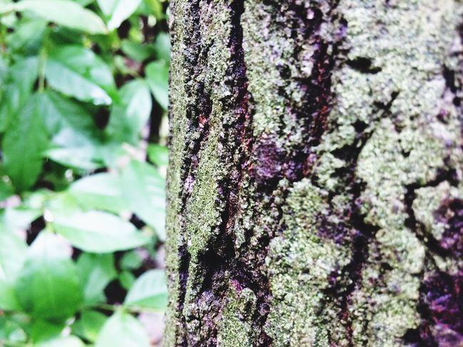 Tree Trunk Tree Day
