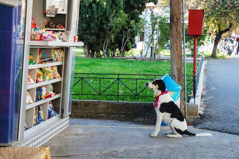 Dog sitting outside shop