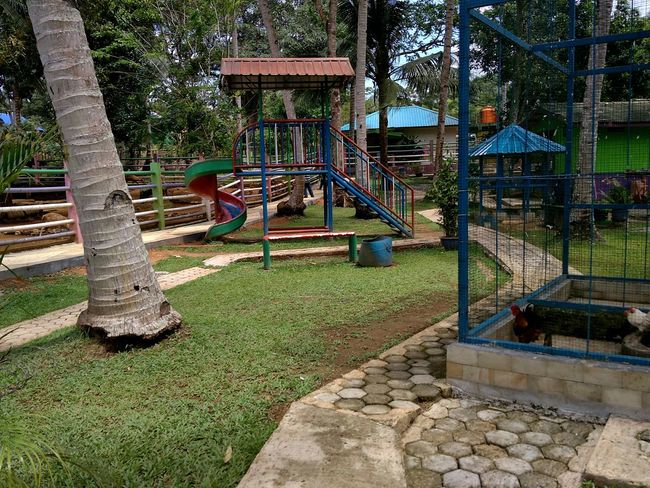 Play grounds Colourful colour of life Enjoying Life Minizoo Xiaomi Xiaomiphotography Xiaomiphotograph Daily Life Dailyphoto #traveldestinations #traveller #travelling Kijang Kijang Kota Bintan  Bintanisland Kepulauanriau Wonderfulkepri  INDONESIA Wonderful Indonesia Playground Park - Man Made Space Day Outdoors Tree Grass No People Childhood Outdoor Play Equipment Nature