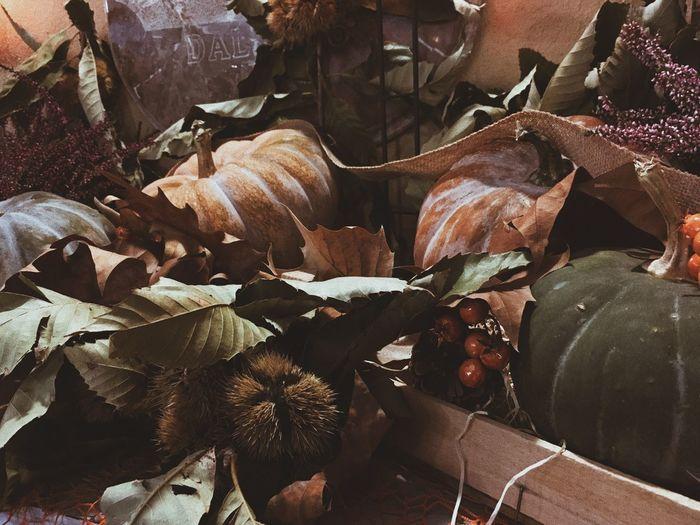 EyeEm Nature Lover EyeEmNewHere EyeEmBestPics EyeEm Best Shots VSCO Autumn Pumpkin Full Frame Nature Leaf Plant No People Backgrounds Plant Part Growth Day Sunlight High Angle View Close-up Succulent Plant Abundance Autumn Mood