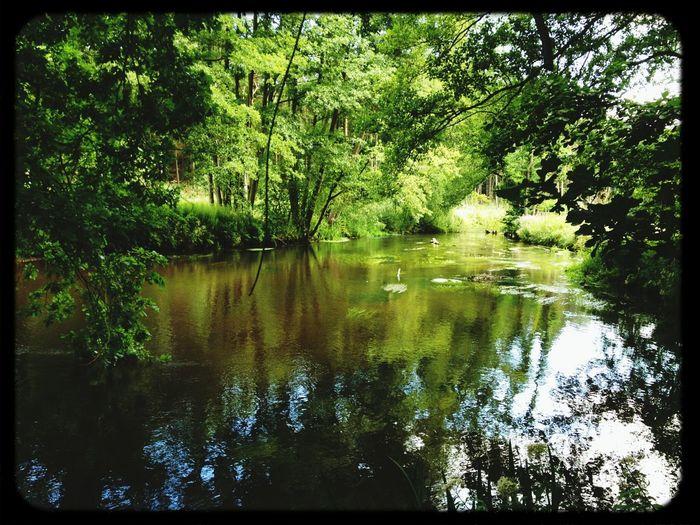 Die Örtze zwischen Müden und Hermannsburg . Water Reflections Nature