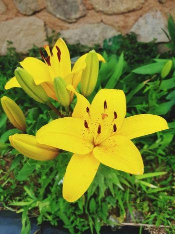 Flower Head Flower Yellow Leaf Petal Close-up Plant Animal Themes