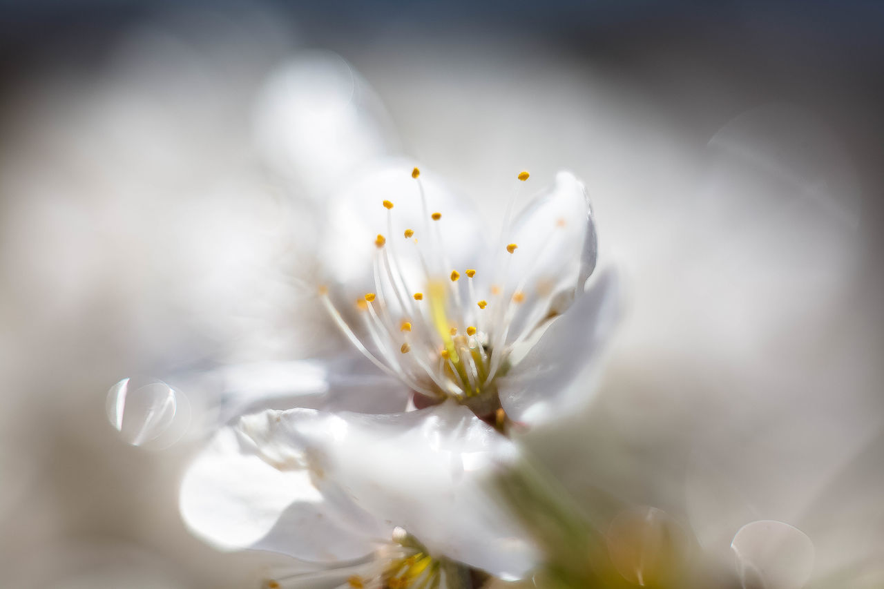 Close-Up Of Water Drops On Flower