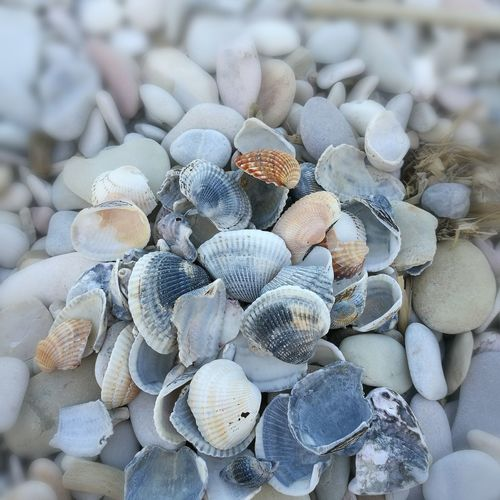 Day Full Frame Nature Pebble Abundance Stack No People Seashell Beach Large Group Of Objects Outdoors Backgrounds Close-up Beauty In Nature Pebble Beach Spiaggia Conchiglie First Eyeem Photo
