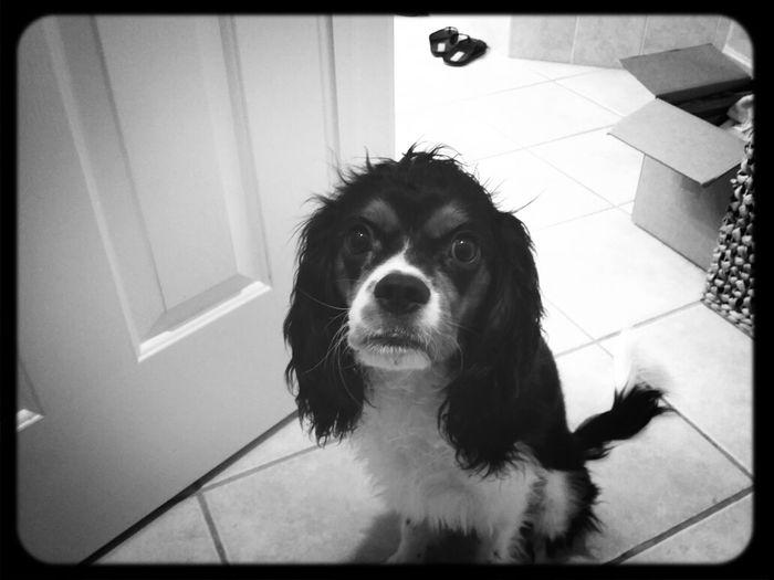 My dog ...