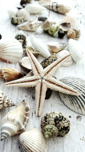 Starfish Close-up Variation Abundance Starfish  Collection Creativity Coastal Life Nature Tranquil Scene Group Of Objects Shells On Wood Shells🐚 Shell Seaside Marine Coast