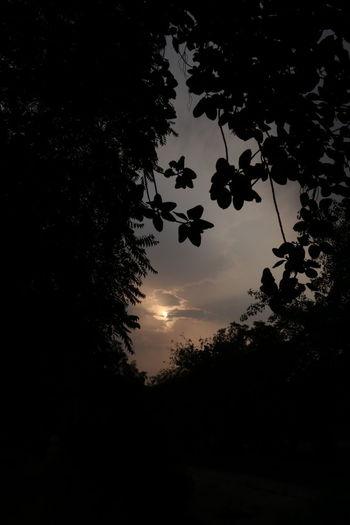 sunset #sun #clouds #skylovers #sky #nature #beautifulinnature #naturalbeauty photography landscape Leaves🌿
