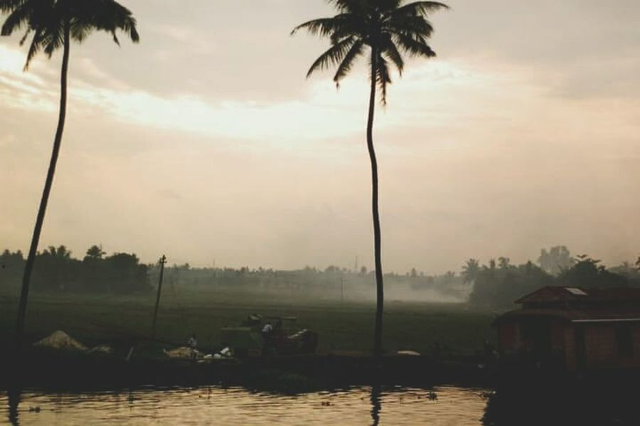 Palm Tree Tropical Climate Morning Fog Outdoors Backpackerlife India Travel Photography Travel Destinations Streerphotography