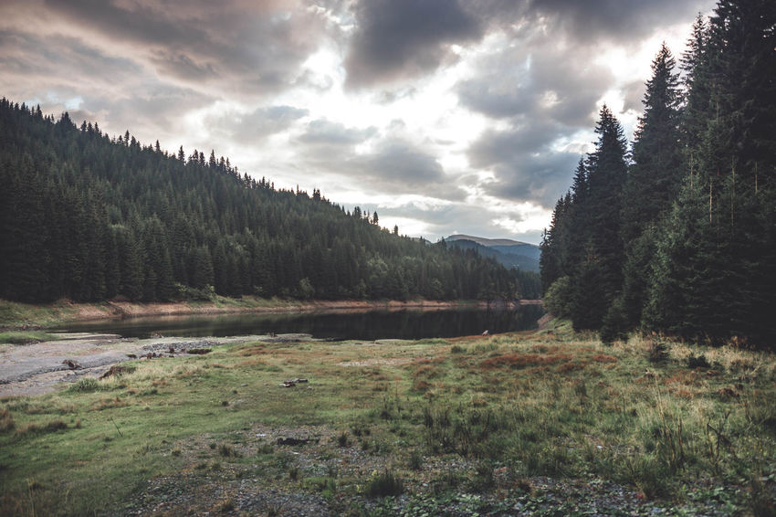 Wilderness landscape against blue cloudy sky on sunrise Beauty In Nature Cloud - Sky Coniferous Tree Day Environment Forest Growth Idyllic Land Landscape Mountain Mountain Range Nature No People Non-urban Scene Outdoors Pine Tree Plant Scenics - Nature Sky Tranquil Scene Tranquility Tree Water Wilderness