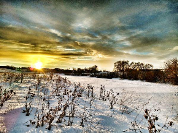Sunset Sky Nature Beauty In Nature Tree No People Cloud - Sky Landscape Winter Beautiful Sun Russia