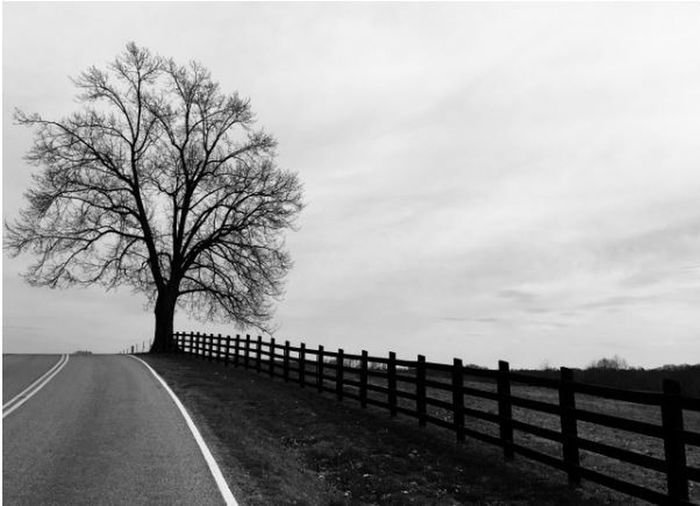 Roadside Tree No People Outdoors Nature Tree Trees TreePorn Tree_collection  Tree And Sky Treescollection Silhouette Silhouettes Silence Silouette & Sky Silhouette_collection Sillouette Silent Moment Solitude Solitary Lost In The Landscape Black And White Friday EyeEm Ready   An Eye For Travel