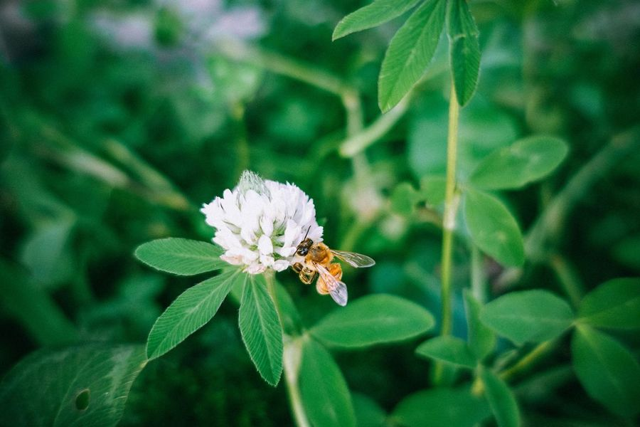 Bee Littlethings Photo_of_the_day Hello World