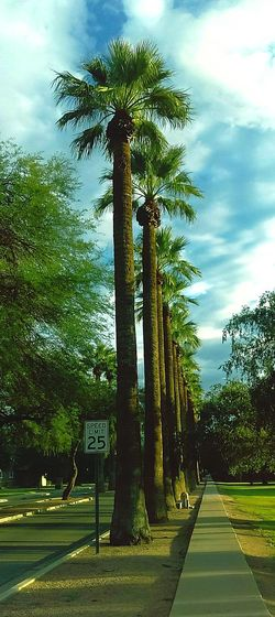 Trees Palm Tree Tree Tall - High Standing Tall Lines And Angles Lines In The Sky Stand In Line Tree Trunk Treelined Takingphotos Line Forms Here
